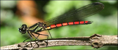 _47078572_insect_iucn_766