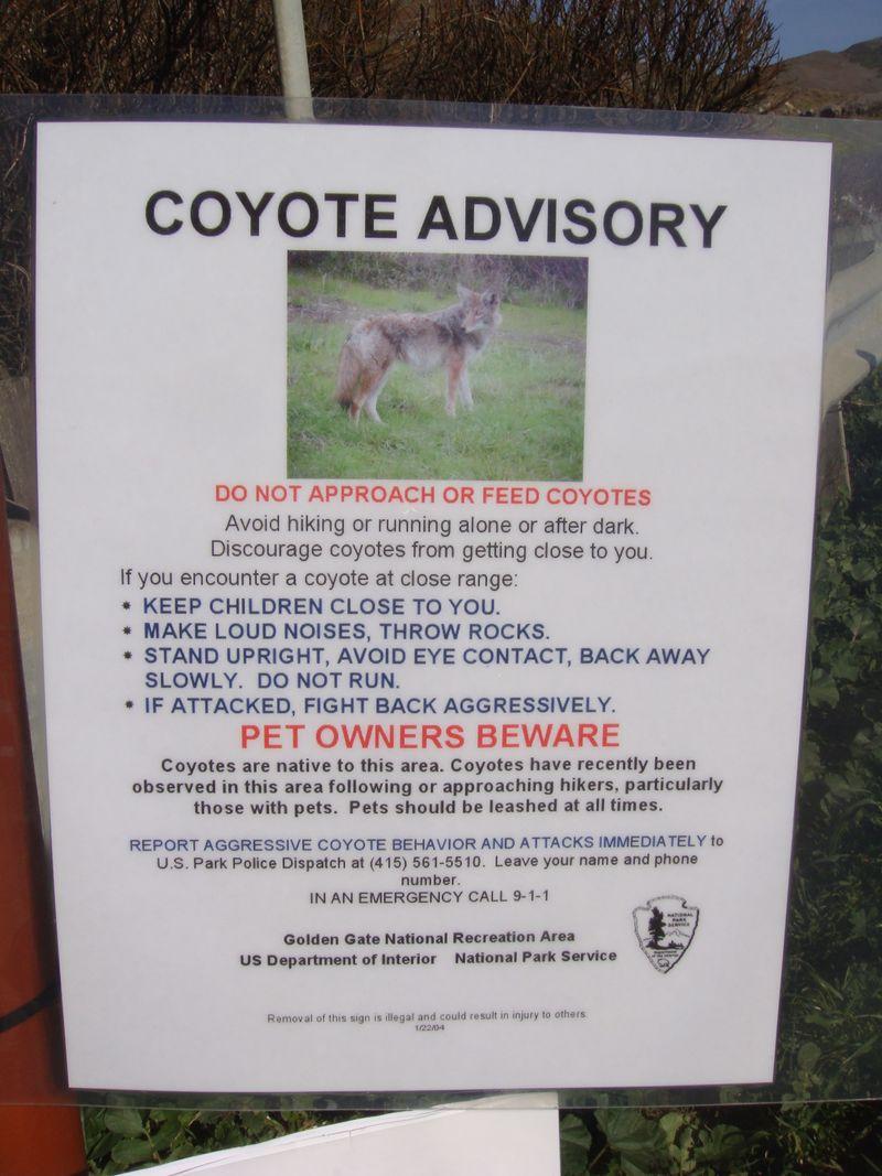 Coyote advisory