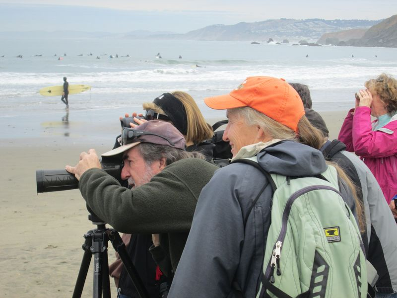 Donahue birdwatch