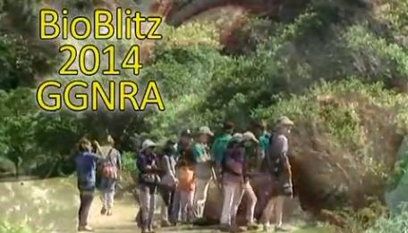 Bioblitz2014-1
