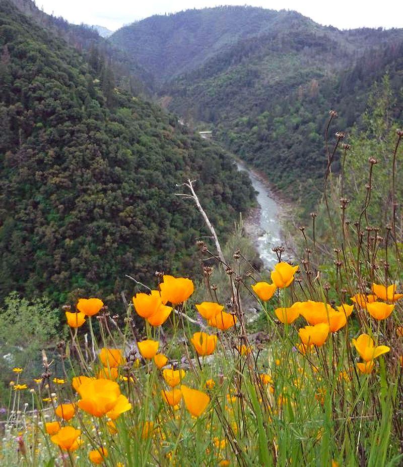 Poppy Canyon 2-