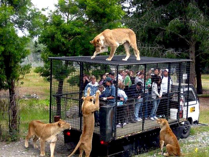 LIONS=