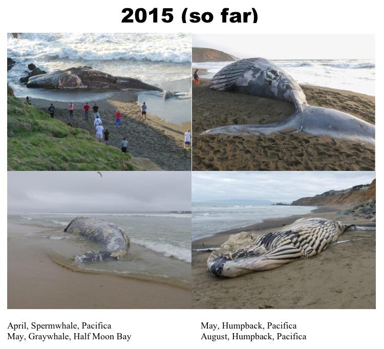 Dead Whales 2015