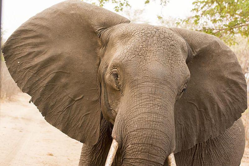19-Hwange elephant
