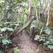Lake Eacham Rainforest