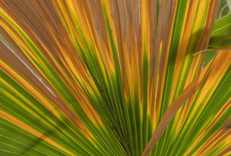 20180509_palm-springs_0015