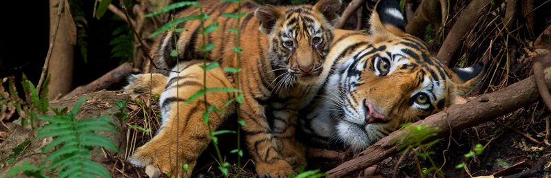 Sign_to_keep_big_cats_safe_in_the_wild