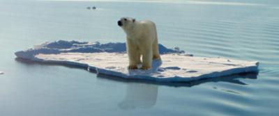 P_bear_arctic_large_01_2