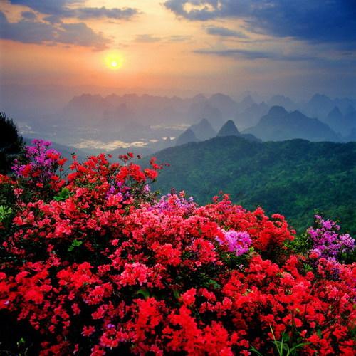 Pretty_china_19