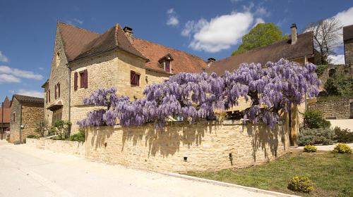7-Montfort wisteria